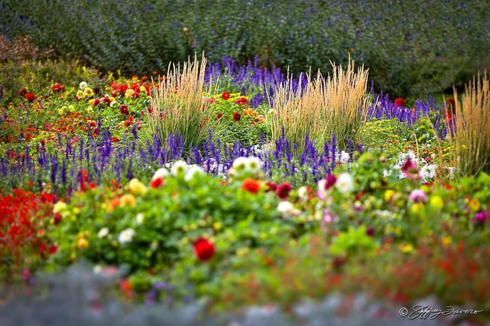 Municipal Garden Colors