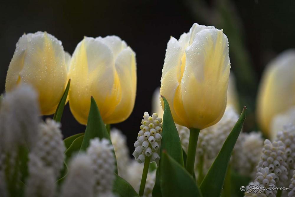 Vanilla And White