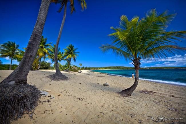 Sun Bay Palms