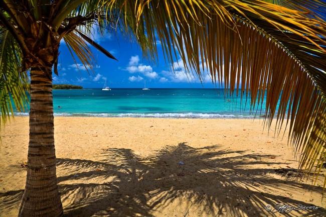 Sun Bay Palm