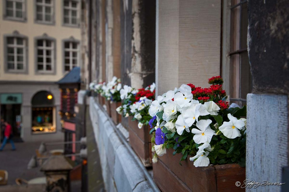 Aachen Window Box Flowers
