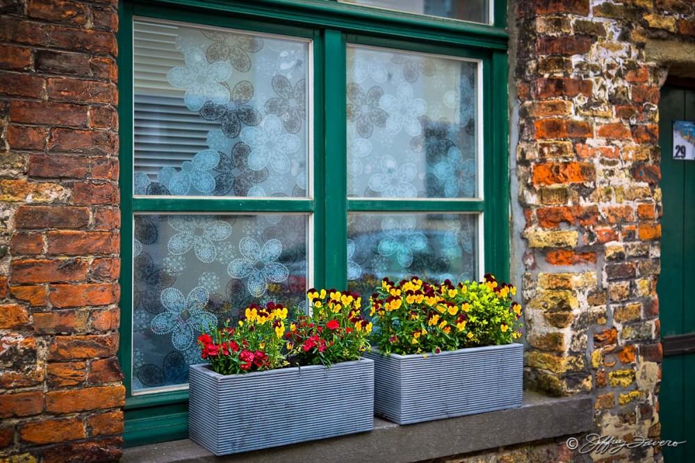 Window Box Flowers - Belgium