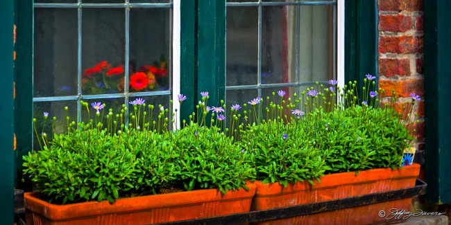 Belgian Window Box Flowers