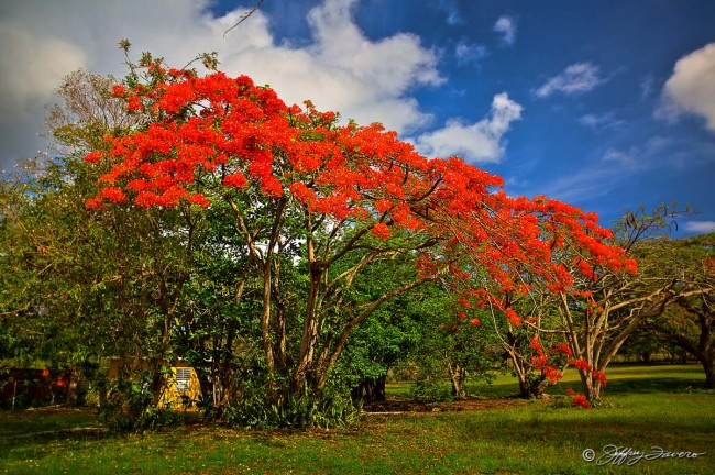 Viequesan Color