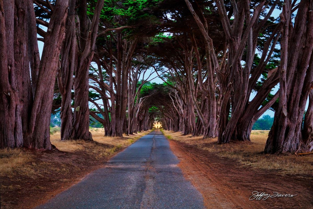Cypress Tree Tunnel Jeffrey Favero Fine Art Photography
