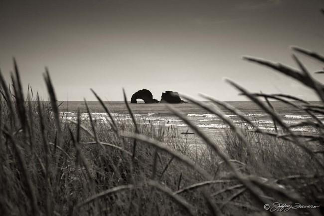 Oregon Coast Tall Grass