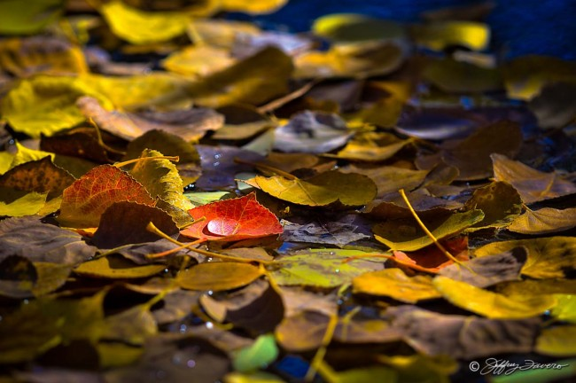 Fall Leaves And Raindrop