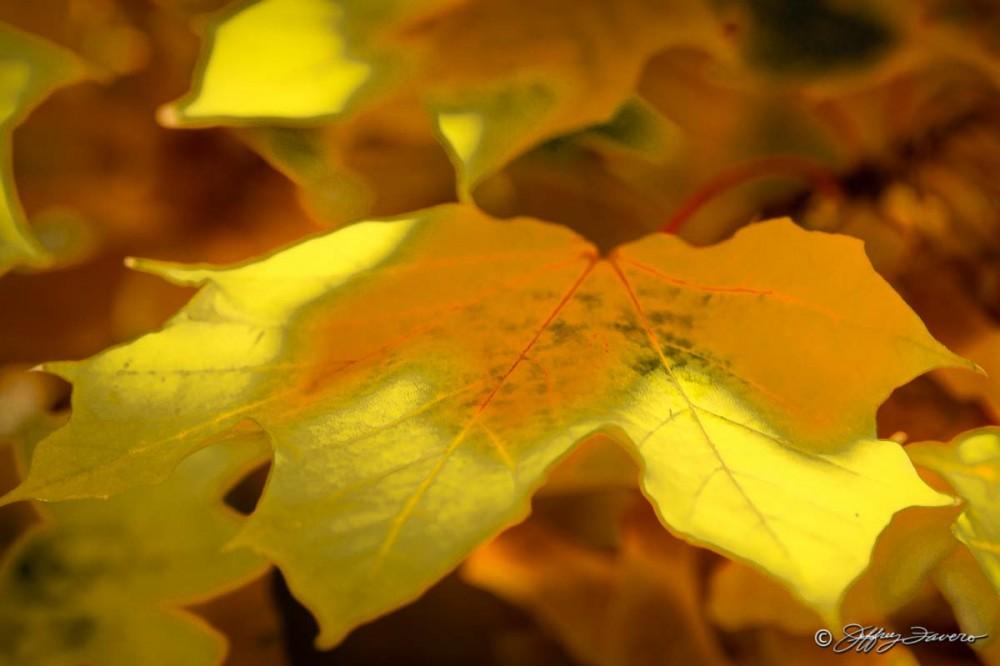 Fall Iridescence