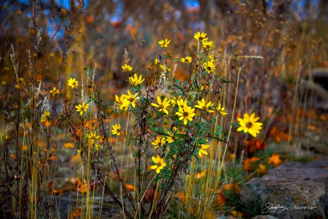Wildflower For All Seasons