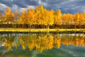 Quaking Aspen Reflection