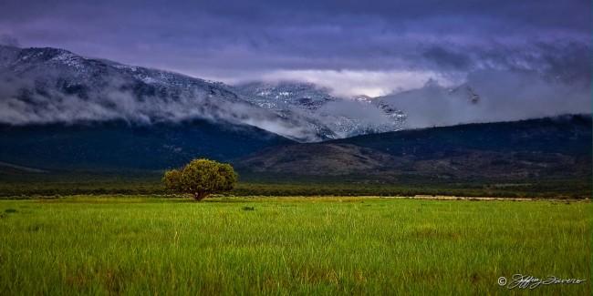 Spring Grass Mountain Snow