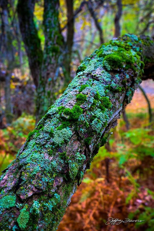 Nature's Symbiosis