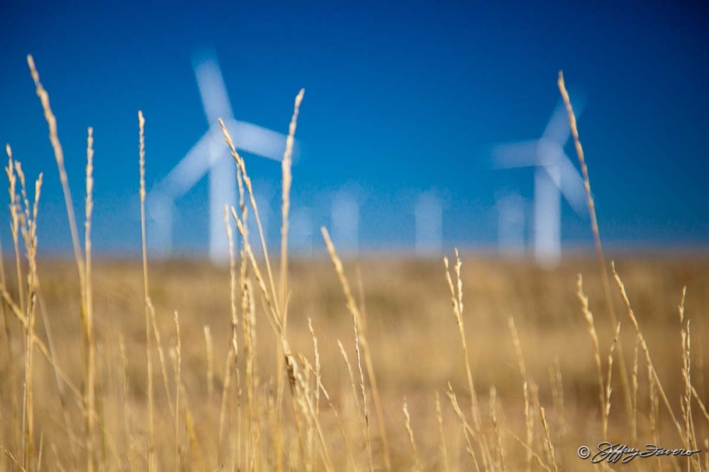 Golden Grass And Wind Turbines