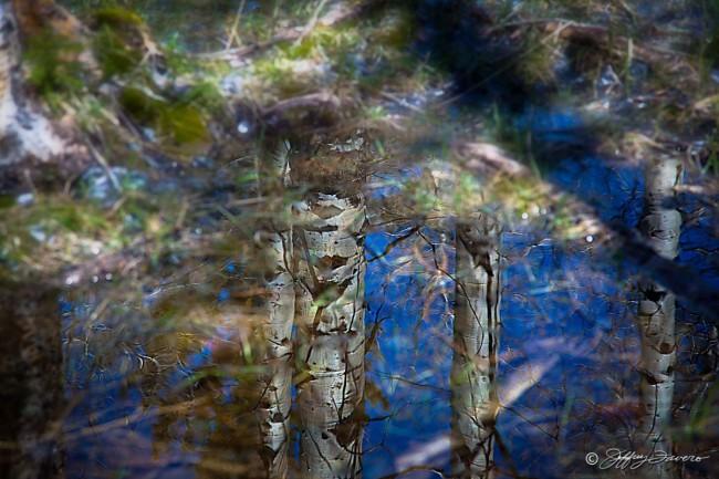 Quakie Reflection