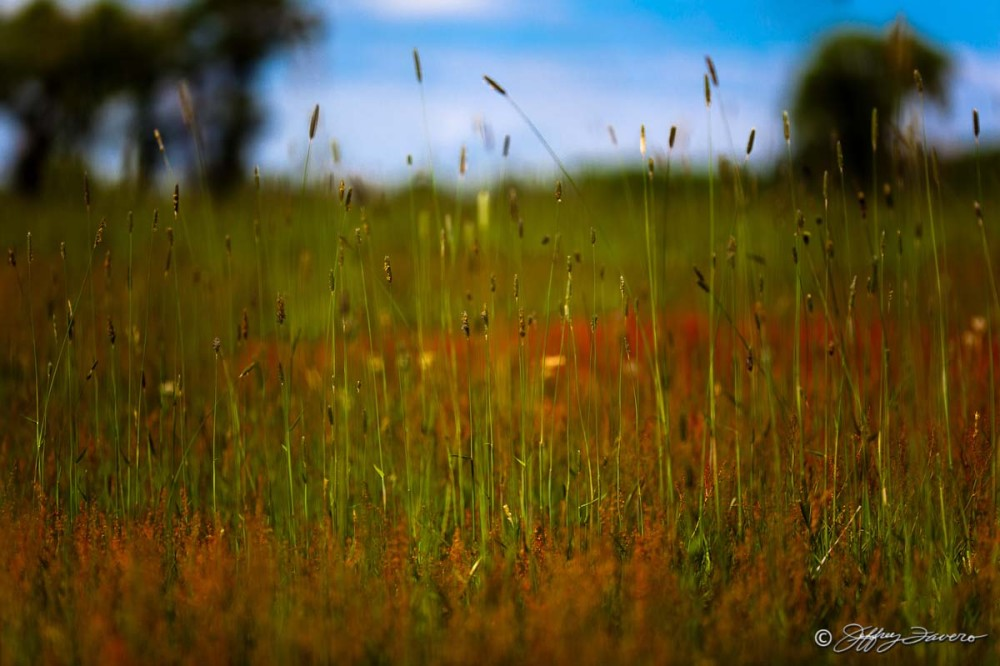 Tall Spring Grass