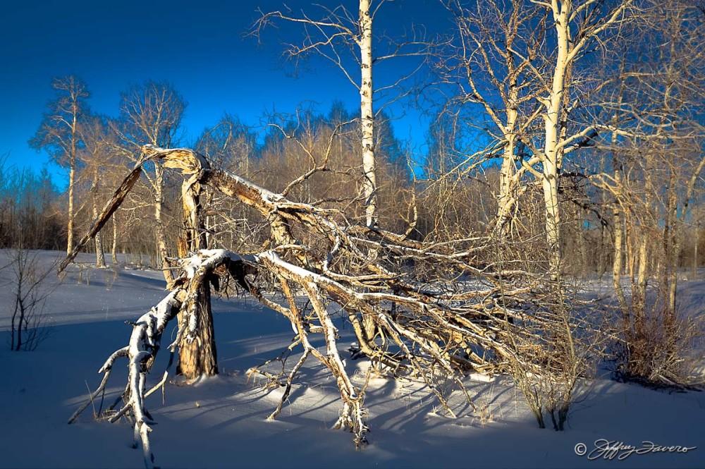 Winter Sunrise On Fallen Tree