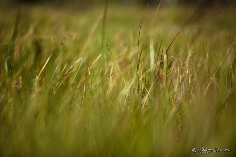 Tall Summer Grass