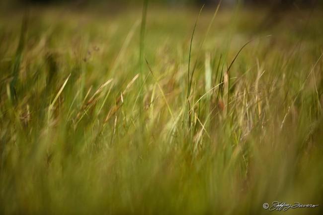 Tall Summer Grass