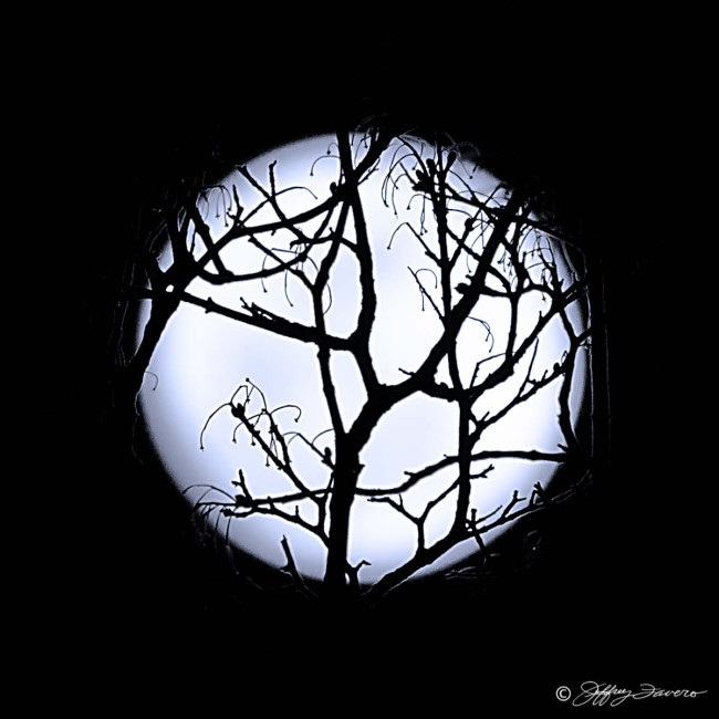 Full Moon Through Branches