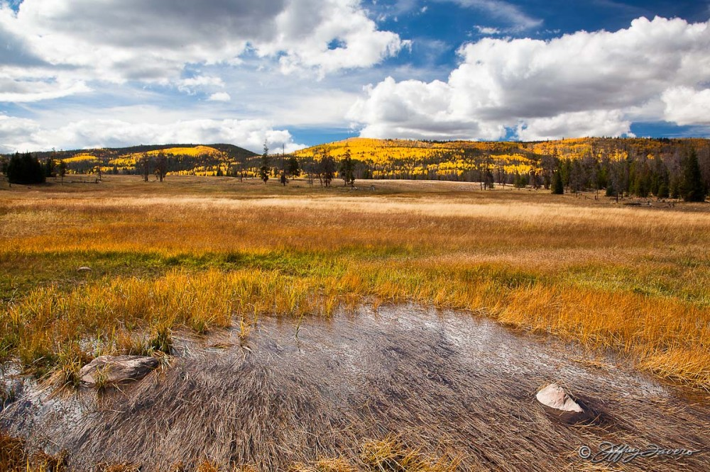 Grassy Field - Wasatch NP