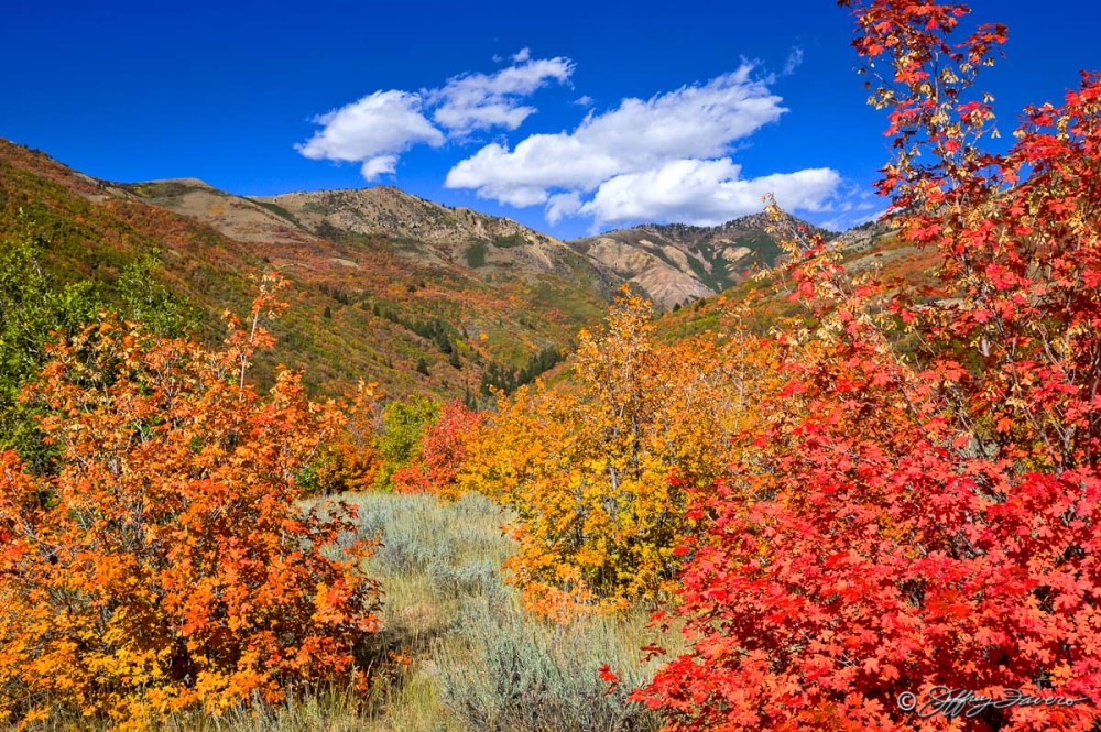 Fall Eden Color