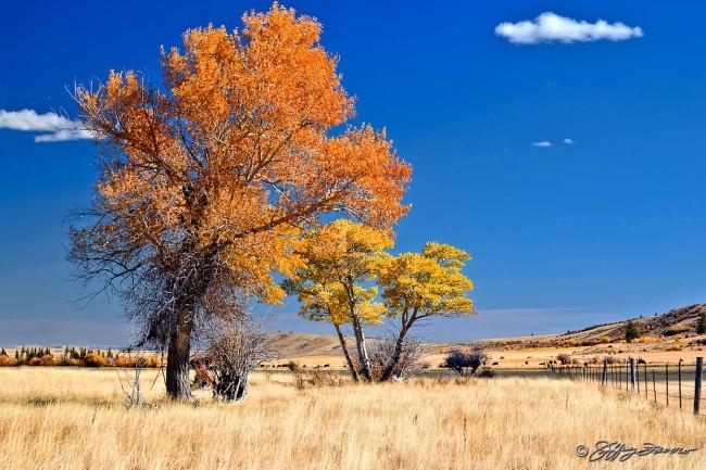 Fall Golden Grass