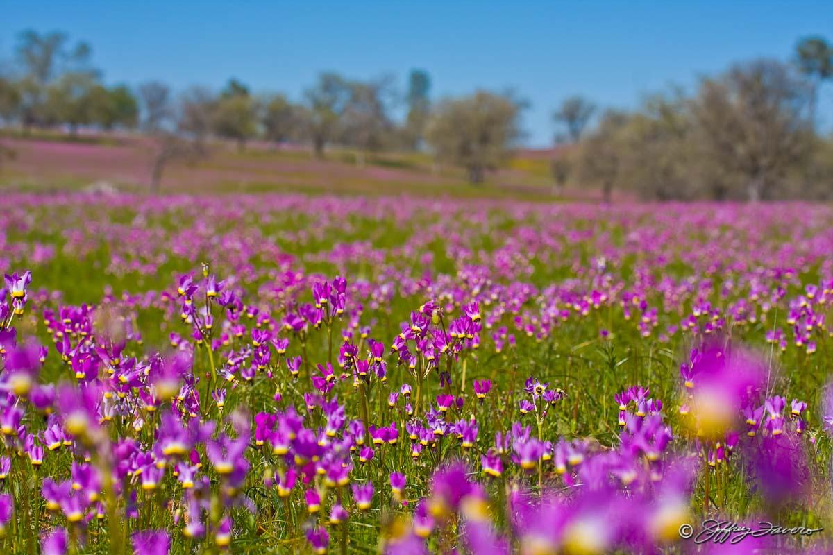 Field Of Wildflowers Jeffrey Favero Fine Art Photography