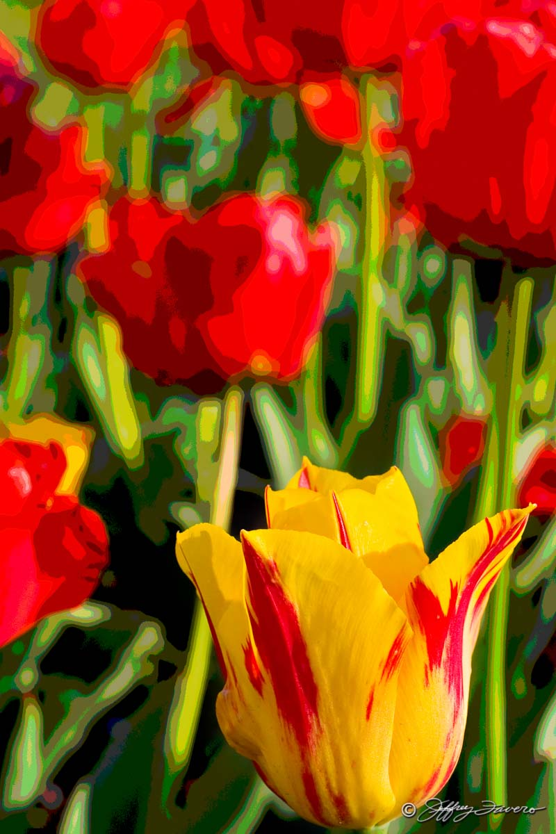 Ukraine Tulips
