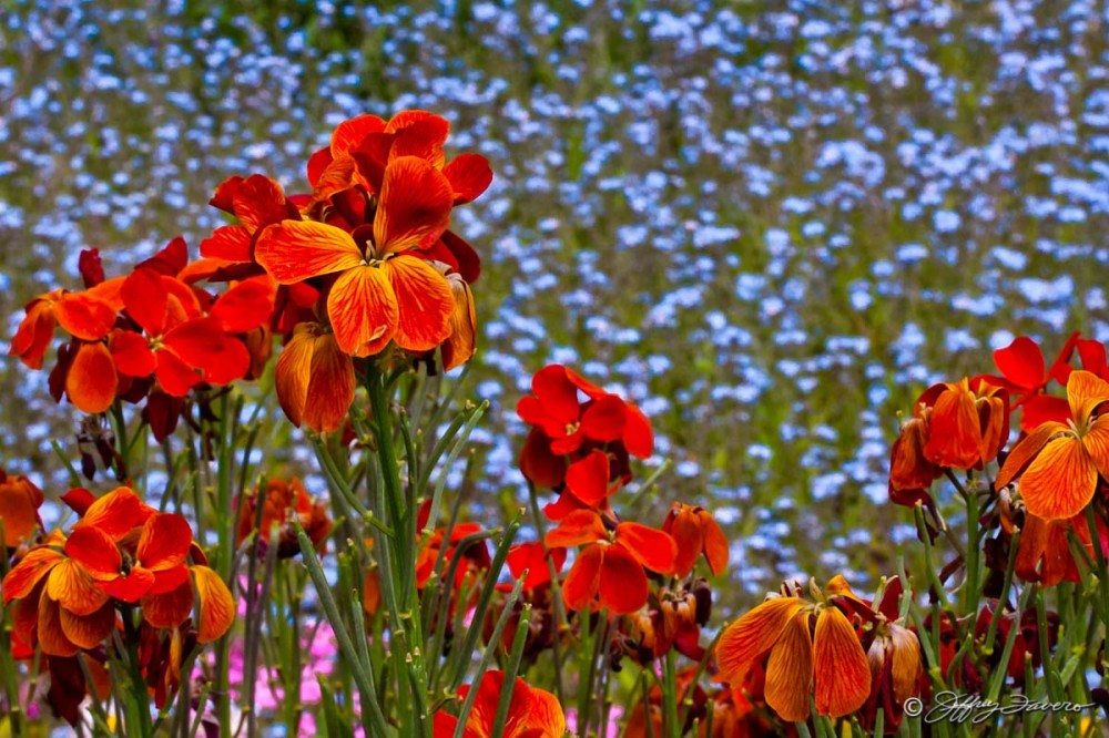 Nature's Color Palette