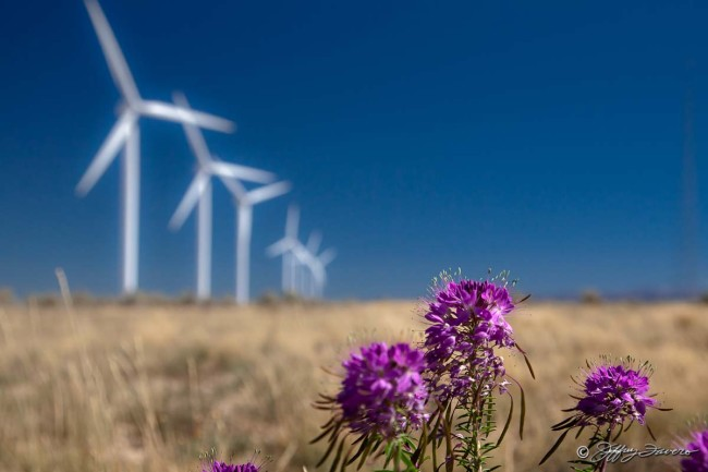 Wildflowers And Wind Turbines
