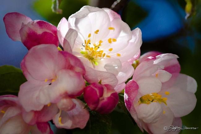 Kaytie's Blossoms