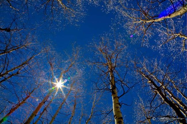 Sun Through Quaking Aspens