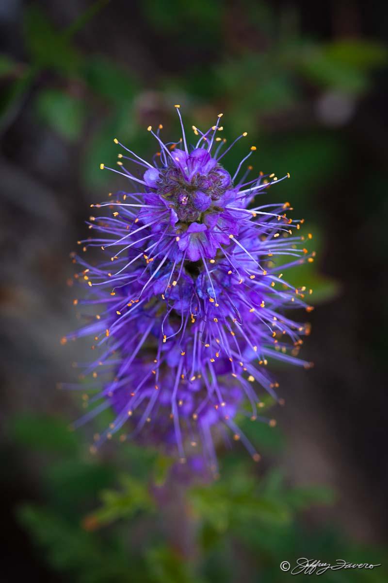 Purple Spines