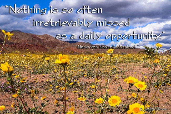 Daily Opportunity - Death Valley NP