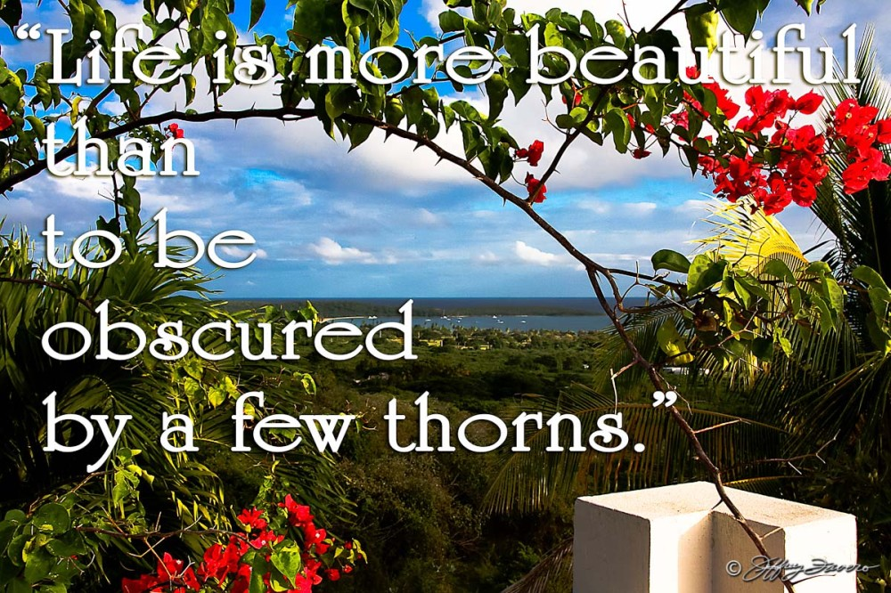 Life Is More Beautiful - Vieques PR SVI