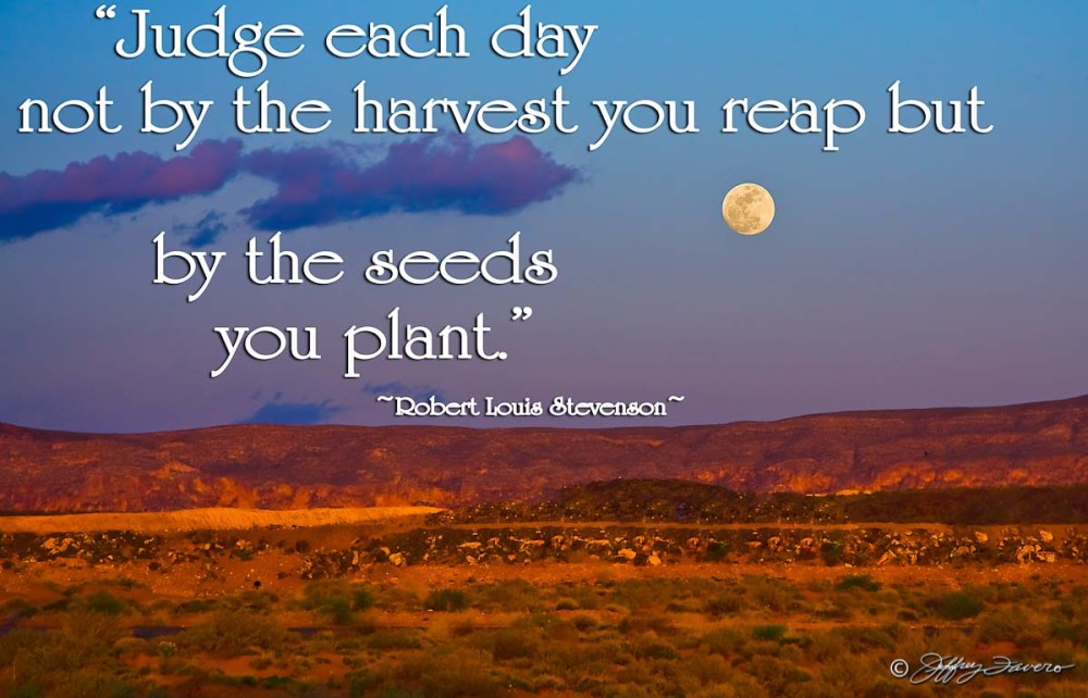 Seeds You Plant - Saint George, Utah