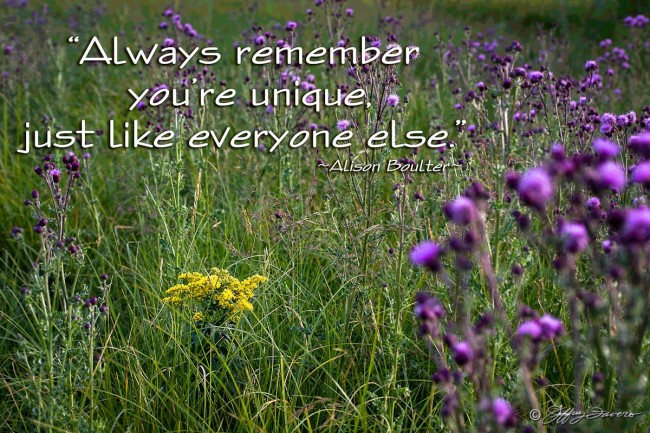 You're Unique - Yellow And Purple Thistle