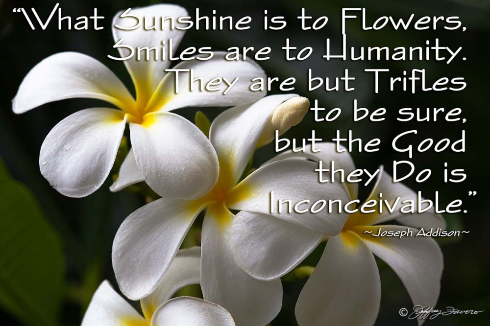 Sunshine Is To Flowers - Frangiapani