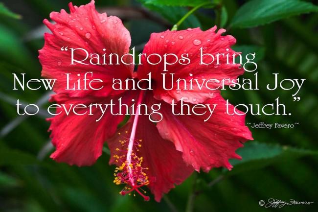 Raindrops Bring New Life - Hibiscus