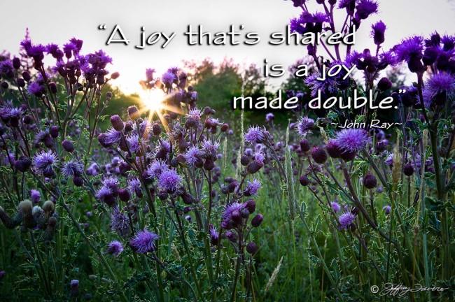 Joy Made Double - Sunburst Thistle