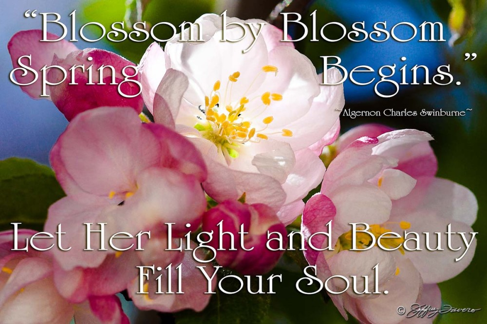 Light And Beauty - Spring Blossoms