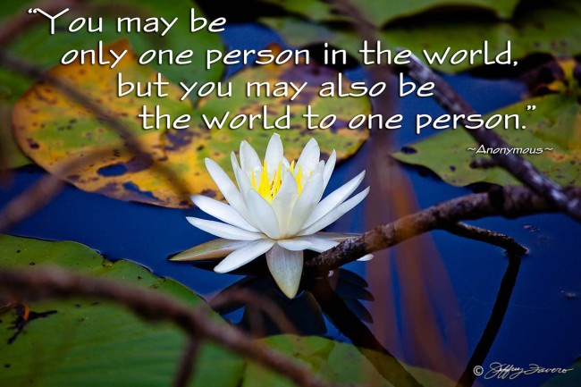 Only One Person - Lily Pad Blossom