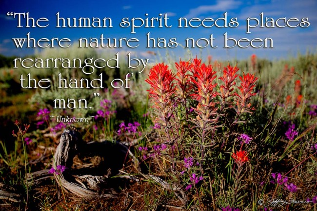 Human Spirit - Indian Paintbrush