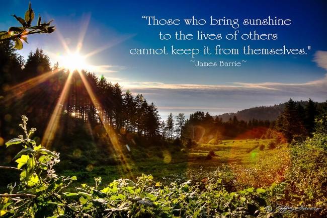 Those Who Bring Sunshine - Sunburst Over Pines