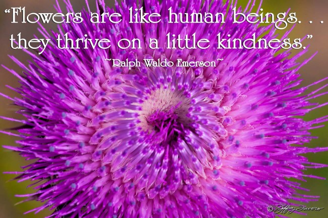 Kindness - Thistle