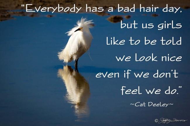 Bad Hair Day - Bird Reflection