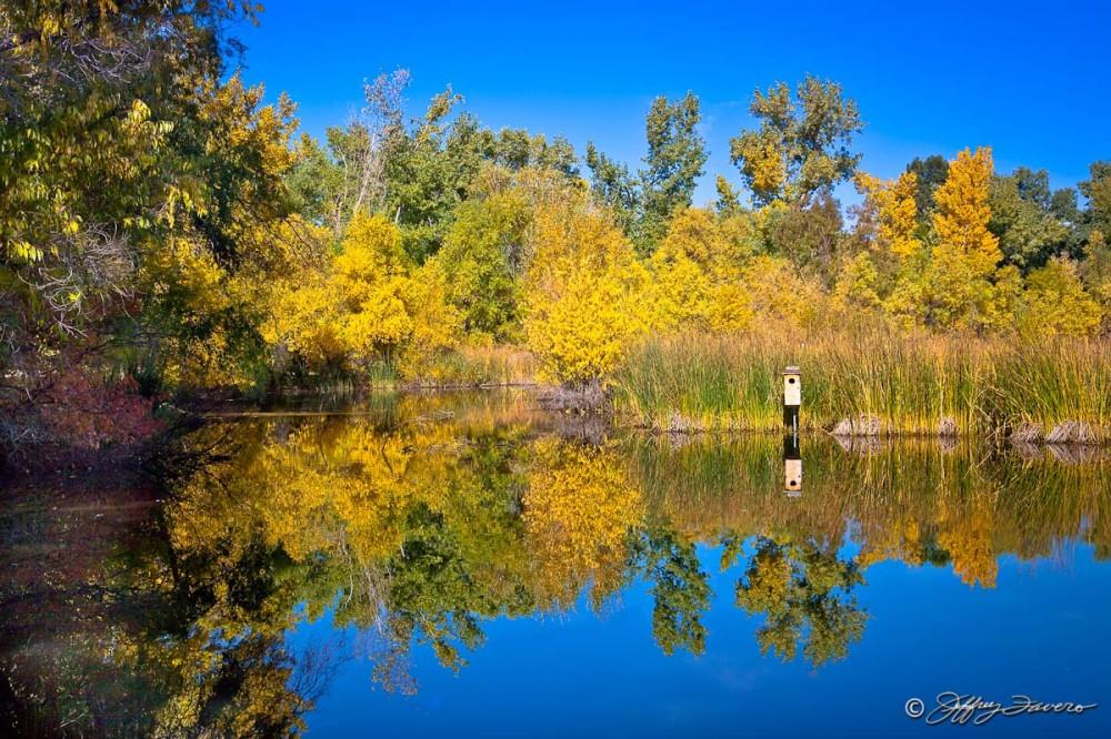 Fall Beus Pond