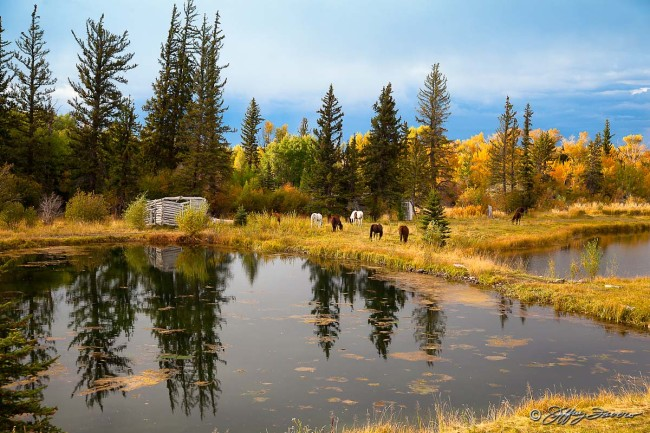Fall Pond Horses
