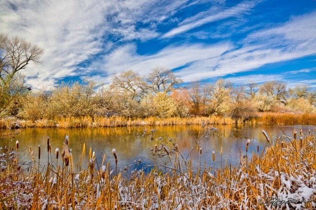 Early Winter Cattails - Marriot/Slaterville