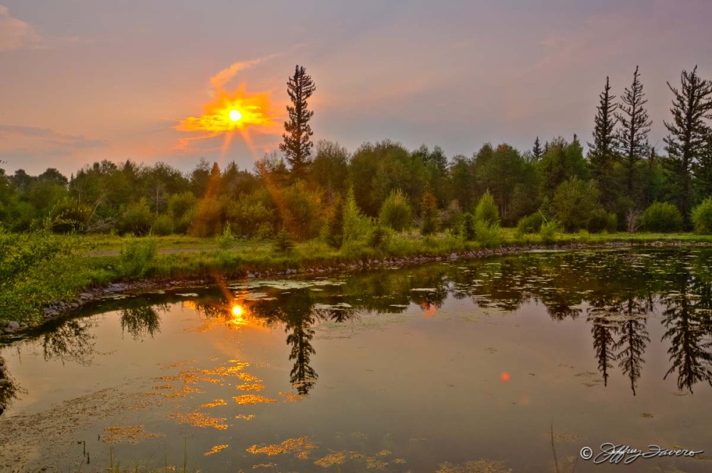 Setting Sun, Pines, Pond